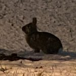 A picture of a rabbit on a ground covered in snow and dead leaves.
